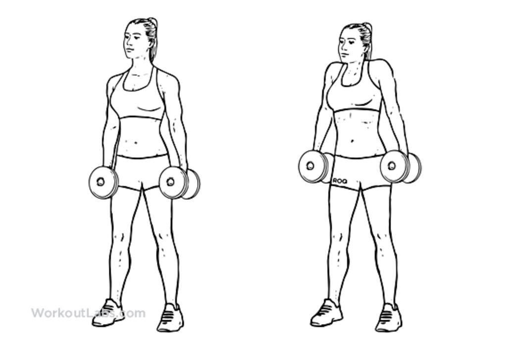 только простые упражнения с гантелей в картинках искренне выразить